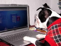 computer-dog.jpg